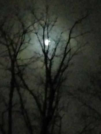 Fall Moon peaking through the leafless trees First Eyeem Photo Foggy Night Bare Trees Bright Moon One With Nature Calming One With The Elements Outdoors