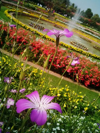 Showcase March Flowers Flower Garden Beautiful Nature Flora Fountain Colorful Mesmerizing Nature Beauty Floralphotography Smartphonephotography 5mpcamera