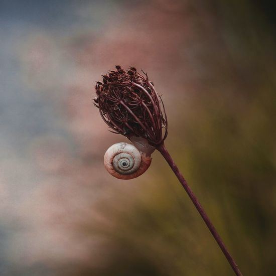 Beautiful snail on the plant in the nature in autumn season
