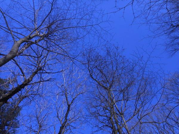 Iwate Japan Takizawa Winter Trees 岩手 東北 滝沢 Trees