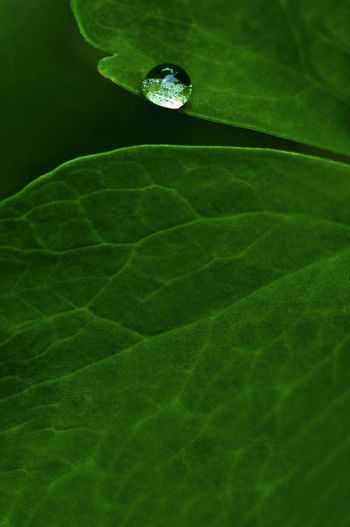 Plant Part Leaf Green Color No People Nature Plant Water Close-up Freshness Beauty In Nature Leaf Vein Vulnerability  Fragility Growth Drop Outdoors Day Wet Botany Purity Dew Leaves