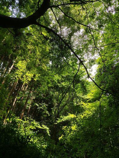 京都 Kyoto Japan 蝉の声 ほっとする 川の音