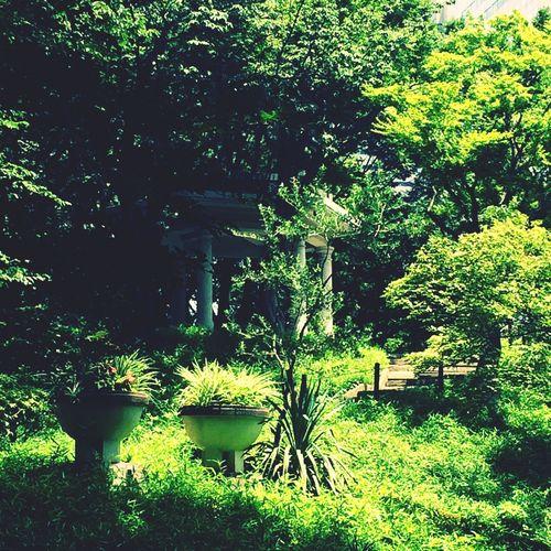 神殿❤️ 神殿 自然 Japan 東京 森 First Eyeem Photo