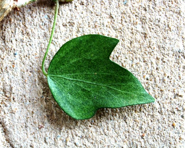 High angle view of leaf on stone