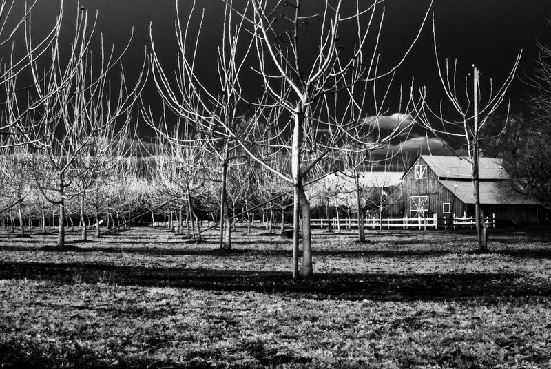 Agriculture Barn Built Structure Grass Growth Illuminated Infrared Photography Irrigation Landscape Nature Night No People Orchard Outdoors Ranch Scenics Sky Tranquility Tree Walnuts Weather
