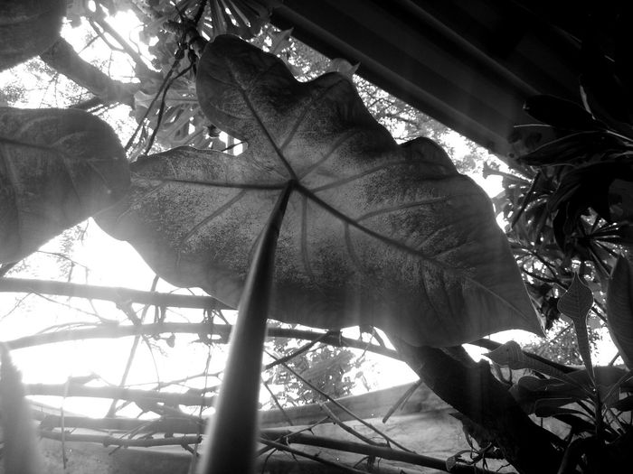 Plants nature Leaf From Underneath Greenery Close Up Black And White Shades Of Grey