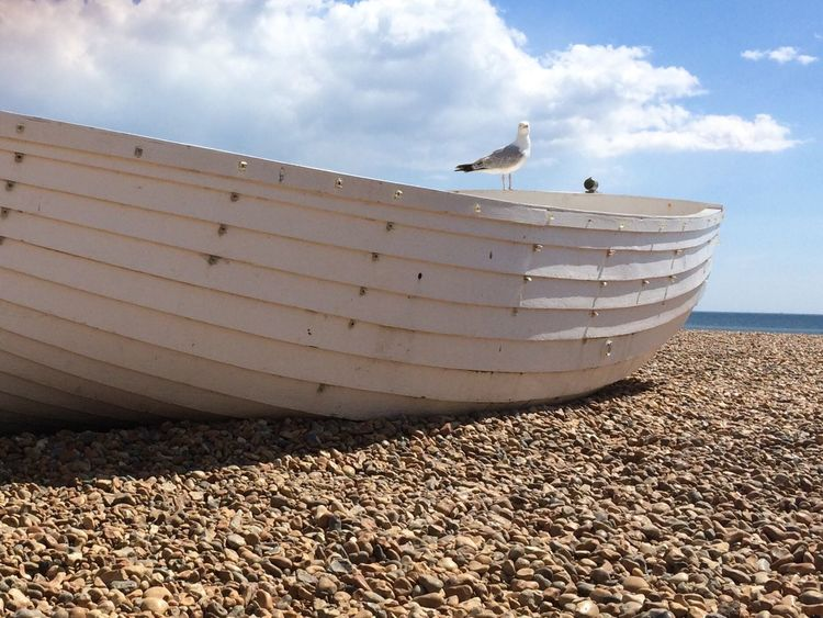 Seagull posing at a boat, Brighton, UK Brighton Beach Pebbles Boat Seagull Bird Sea Blue Sky White Clouds White Boat