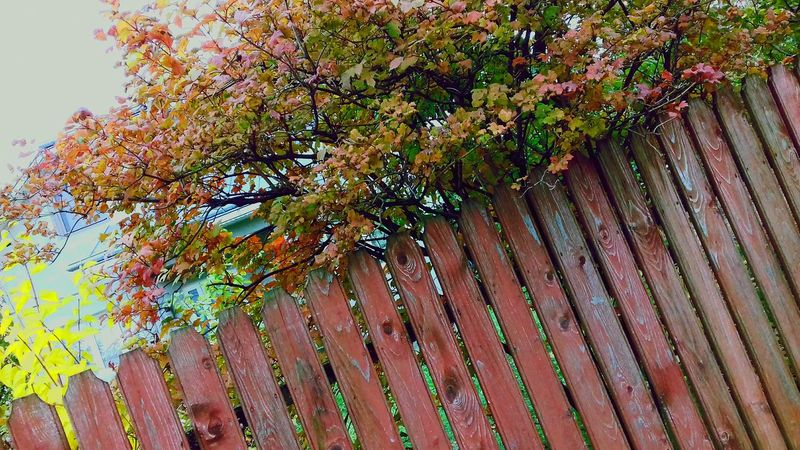 Autumn Colors Beutiful Moments.  BeutifulNature Simplicity.  No People Freshness Day