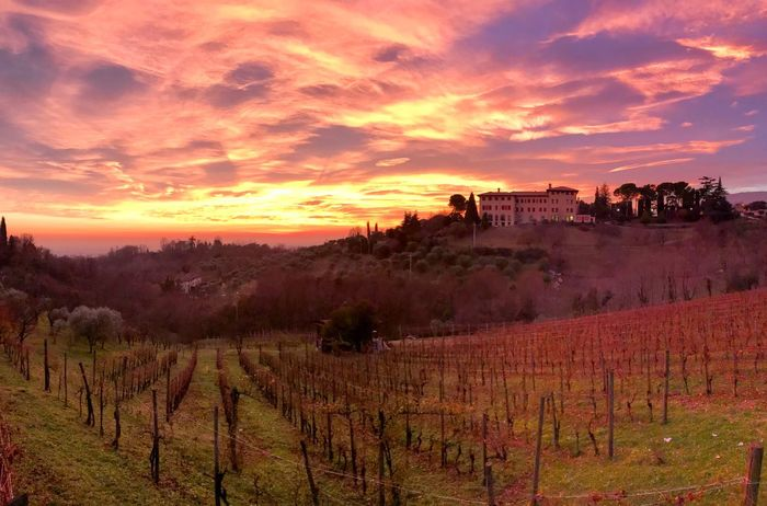 Panoramic Landscape Panoramic View Panoramic Photography Panorama Shotoniphone7 ShotOnIphone Asolo, Italy Asolo After Sunset Sky After Sunset Pink Sky Dramatic Sky Prosecco Hills Vineyard Sunset Nature Scenics Landscape Beauty In Nature Tranquility Vineyard Sky Growth No People Outdoors Tree