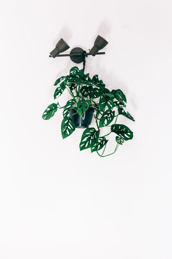 High angle view of plant against white background