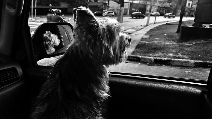 Tutuyorkshire Myfriend♥ Dogfriend Blackandwhitephotography Blackandwhite Photography Capture The Moment The Pursuit Of Happiness Ilovemydog
