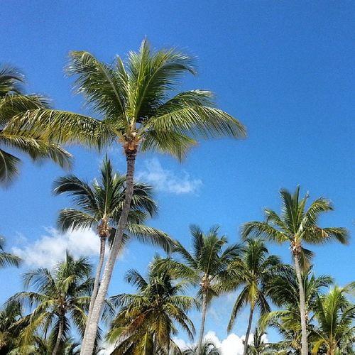 Пальмы, пальмы