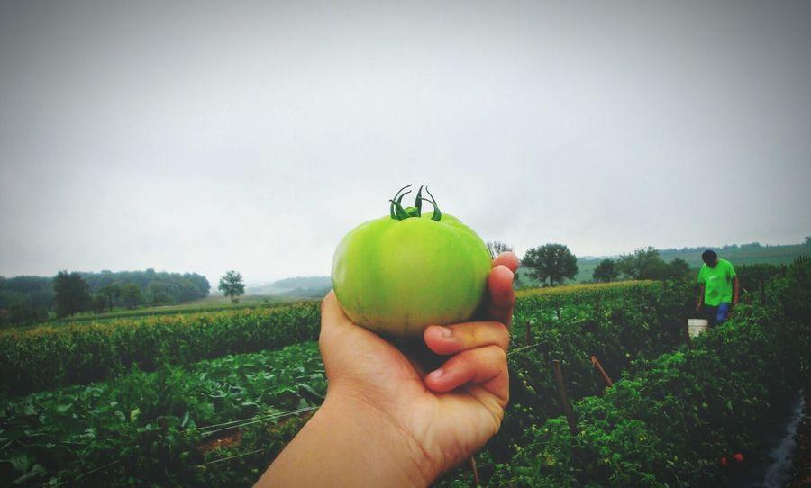 Amishcountry Farm Life Fresh Produce Cloudy Day