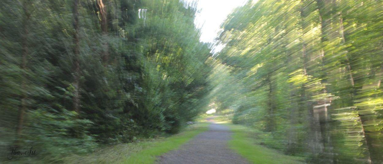 Esprit Foret Nature Wood Bois Experimental Photography Forest Skull Gaia Vibrational Energy Woods