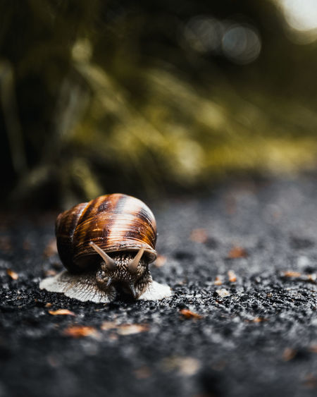 Animal Themes Selective Focus Animal One Animal Close-up Invertebrate No People Day Animal Wildlife Animals In The Wild Mollusk Gastropod Shell Snail Nature Outdoors Animal Shell Road Orange Color Animal Body Part Surface Level Slow Time Speed Sharp Concept Conceptual Nikon D7500 Green Fresh