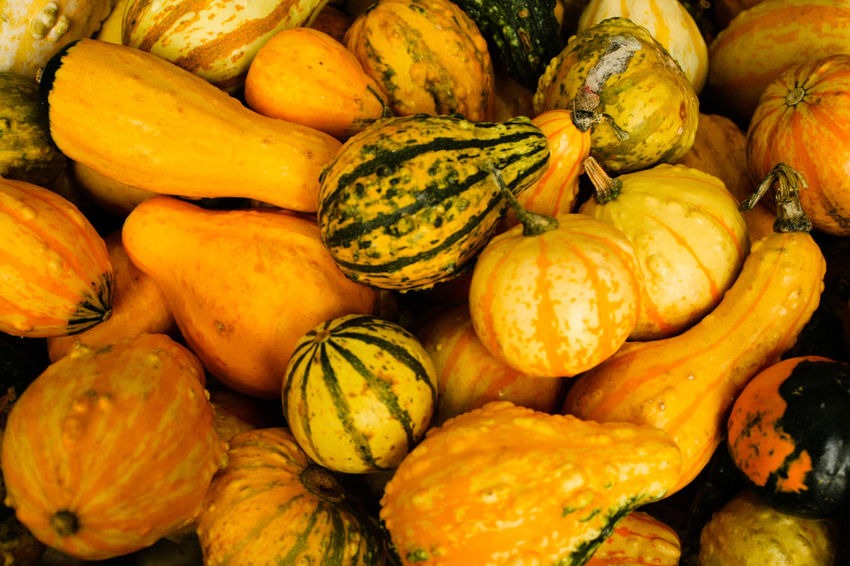 Abundance Backgrounds Food Freshness Fruit Gourd Healthy Eating Healthy Lifestyle Heap No People Pumpkin Vegetable Yellow