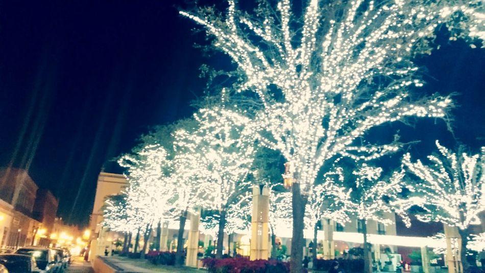 Adapted To The City Illuminated Tree Night