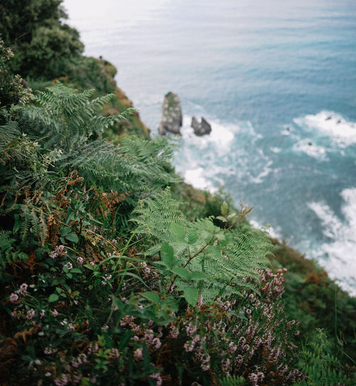 eco Beach Beauty In Nature Day Green Color Growth High Angle View Horizon Over Water Land Nature No People Outdoors Plant Rock Scenics - Nature Sea Tranquil Scene Tranquility Tree Water
