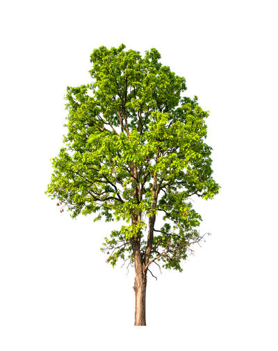 Trees that are