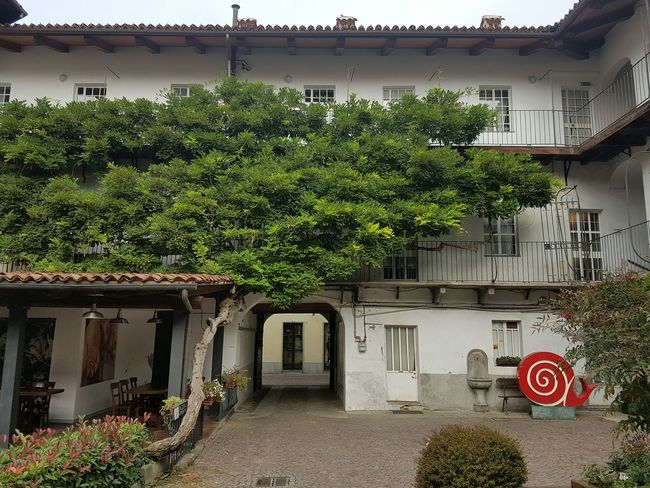 Green Color Tree No People Building Exterior Plant Architecture City Outdoors Growth Built Structure Creeper Plant Day Wisteria Wisteria Plant Climbing Plant Urban Green Bra Piedmont Slow Food Old House Old-fashioned Courthouse Balcony