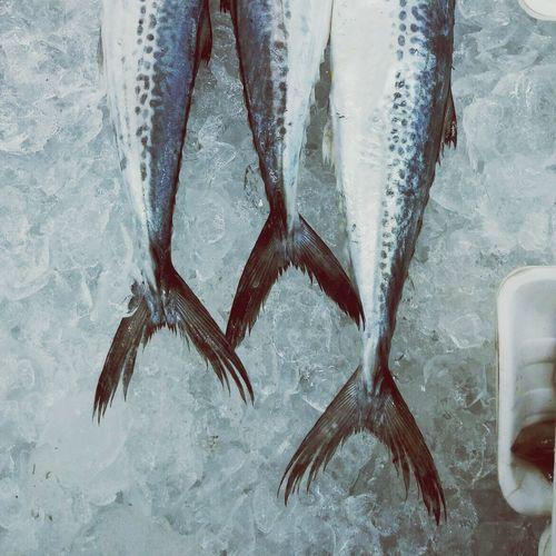 Fish 꼬리