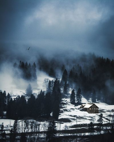 Oberstaufen, Bavaria, Germany Birds Creepy No People Foggy Cabin In The Woods Allgäu Germany Deutschland Europe Cold Bayern Alps Alpen Allgaeu Bavaria Snow Cold Temperature Winter Tree No People Nature Outdoors Night Cloud - Sky Beauty In Nature Fog Landscape Mountain Scenics Forest