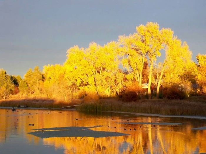 Fall Colors Fall In Colorado Fall_collection Water Reflections Tree_collection  Tree Of Color Changing Seasons Water_collection Seasonscollection My Own Photography