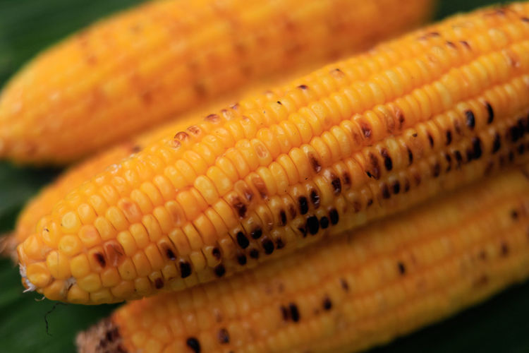 Barbecue Close-up Corn Corn On The Cob Food Food And Drink Freshness Group Of Objects Healthy Eating Pattern Selective Focus Sweetcorn Vegetable Vegetarian Food Wellbeing Yellow