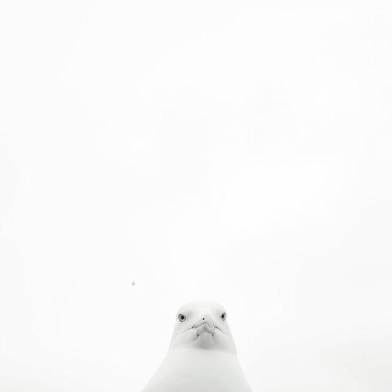 Negative Space Istanbul Turkey Seagull
