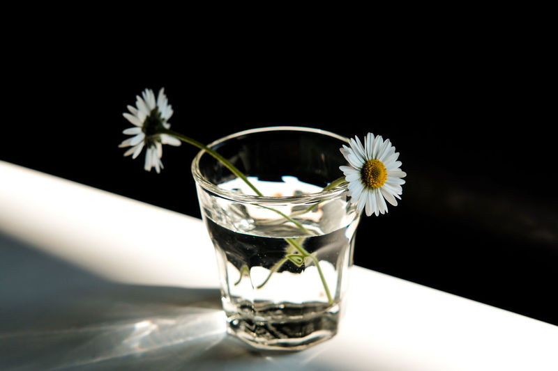 Close-up of white flower in glass on table