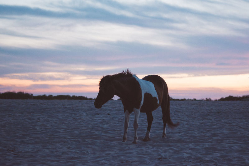 Horse standing on the beach at sunset