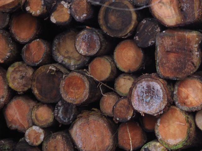 Holzauktion