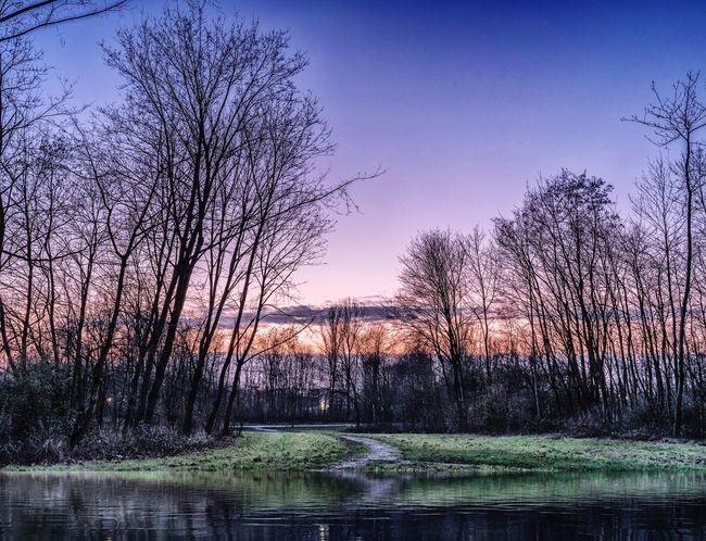 End of the day Bare Tree Tree Beauty In Nature Tranquility Tranquil Scene Nature Reflection Landscape Scenics Sunset Water Sky Outdoors Forest Clear Sky Grass No People