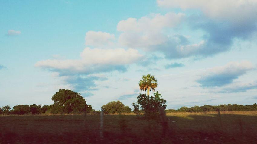 Nature Summer Trees Floridalivin