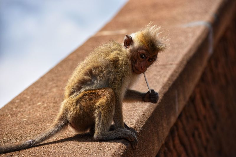 Monkey with lollipop Animal Animal Themes One Animal Animal Wildlife Animals In The Wild Sunlight Nature