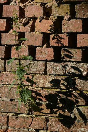 Evening Sun Nature Photography EyeEm Nature Lover Nature_collection Taking Photos Light And Shadow Shadows Stinging Nettles Brick Wall Plants