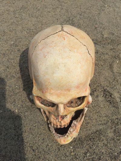 High angle view of human skull