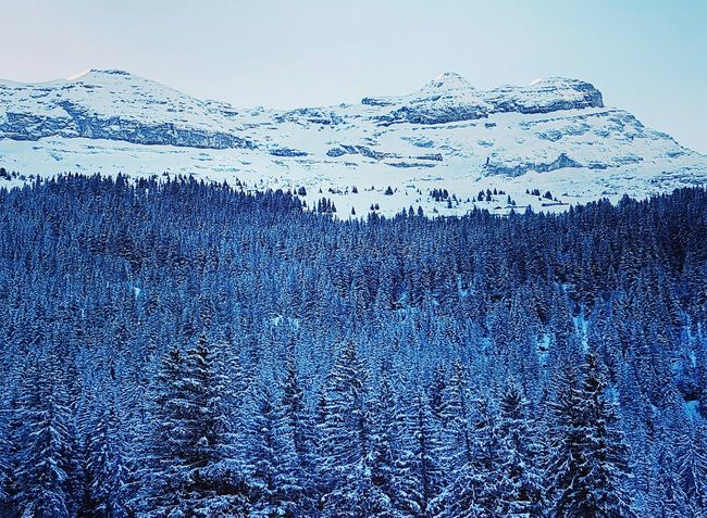 Flainefrance Flaine Snow ❄ Snowcapped Mountain Mountains Trees And Nature
