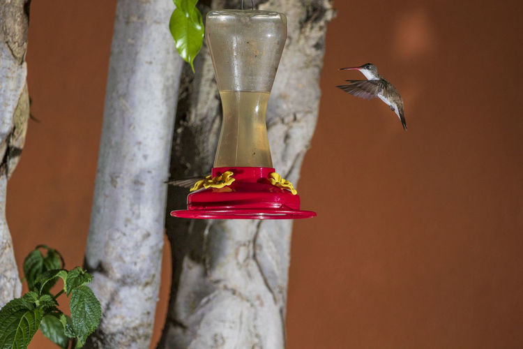 Animal Animal Themes One Animal Animals In The Wild Vertebrate Animal Wildlife Hummingbird Bird No People Bird Feeder Red Flying Close-up Nature Food Focus On Foreground Drink Day Plant Food And Drink Outdoors Glass