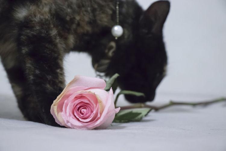cat Cat Animal Life Flower Cute