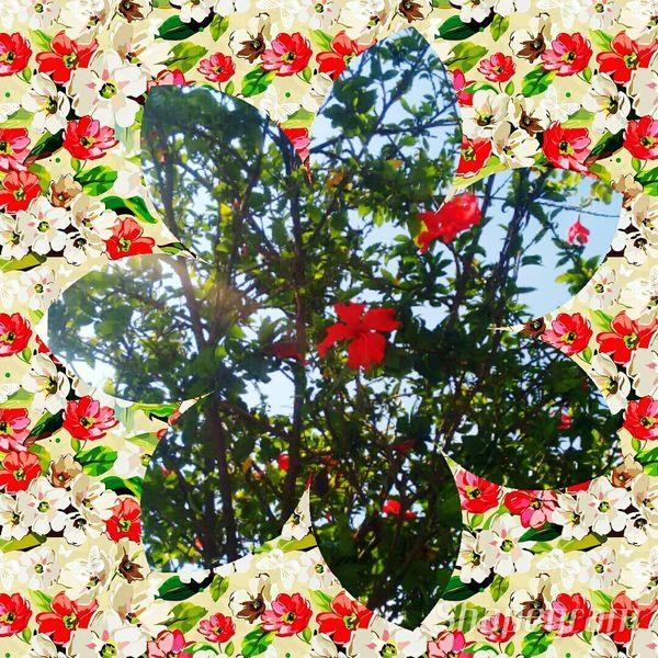 NaturezaMaravilhosa Beautiful Nature Nature_collection Flowers,Plants & Garden Beautifulflower  Flower Collection