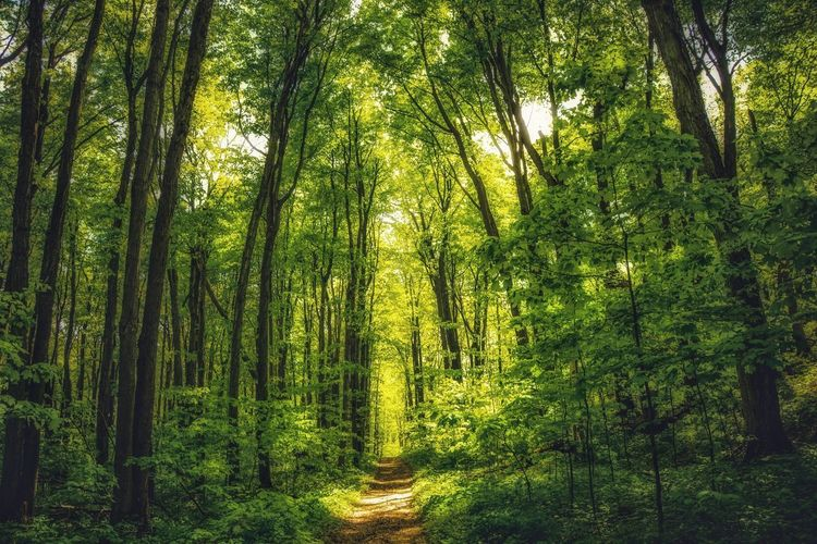 Tree Plant Green Color Growth Beauty In Nature No People Forest Tranquility Nature Land Day Scenics - Nature Backgrounds Full Frame Outdoors Non-urban Scene Tranquil Scene WoodLand Foliage Lush Foliage
