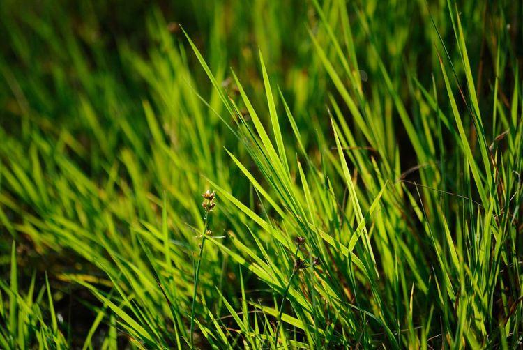 Day Grassy