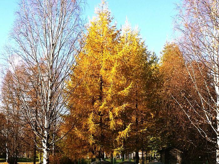 Autumn Colors Tree