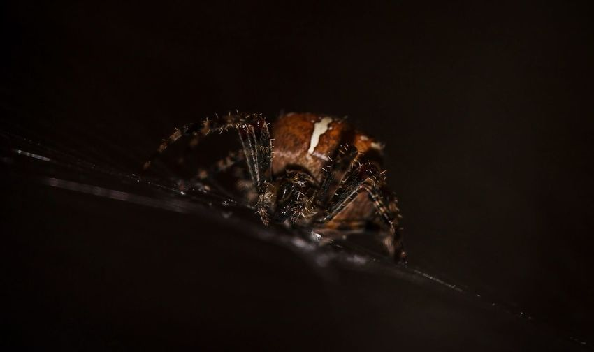 look into my eyes... 😉 Insect Spinne Macro Makro Macro Photography Arachnid EyeEmNewHere EyeEm Nature Lover Insekten Spider Black Background Close-up
