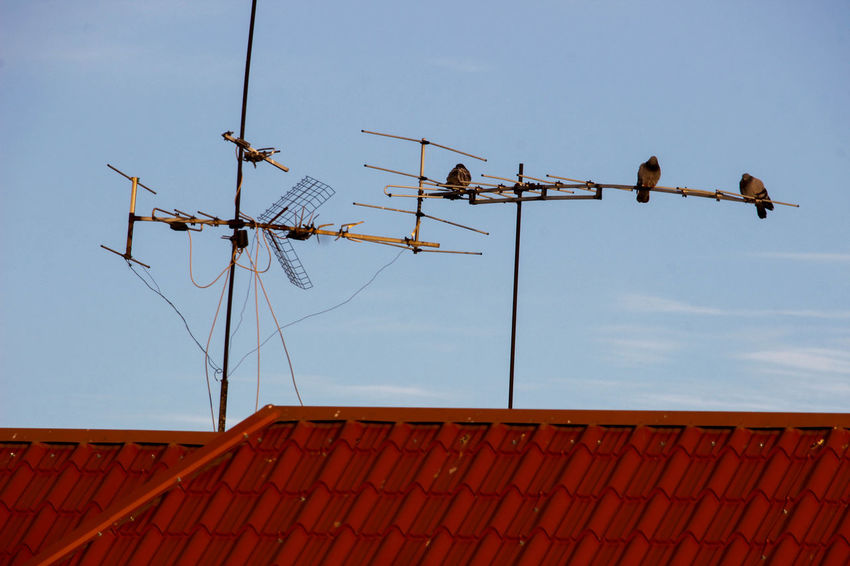 Animal Themes Antenna Antenna - Aerial Architecture Bird Blue Built Structure Communication Connection Day Electricity  Fuel And Power Generation Low Angle View Nature No People Outdoors Power Supply Roof Roof Tile Sky Technology Television Aerial