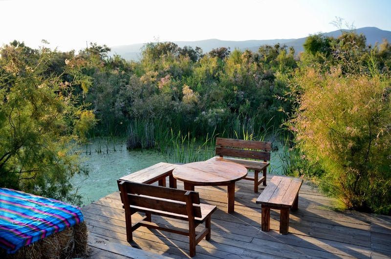 Empty chairs and table against trees by lake