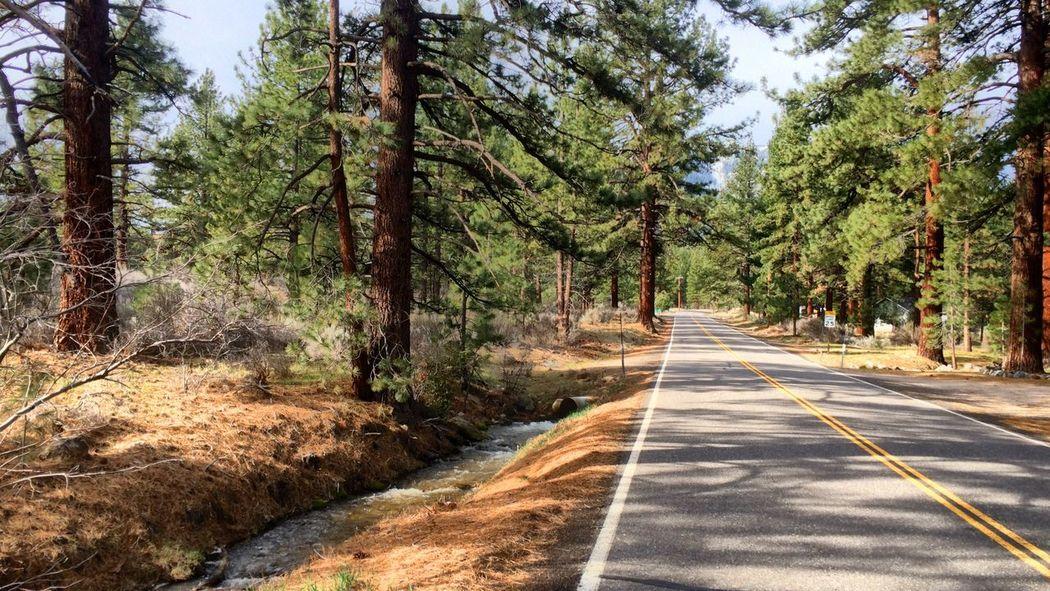 Road California Lost Markleville Roadbike Ride