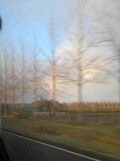 Blurry Vision Is Like This Nature Out Of Focus Speed Ghosts Trees The Purist (no Edit, No Filter)