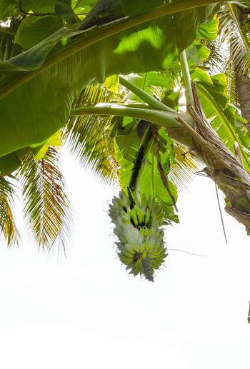 Tree Plant Leaf